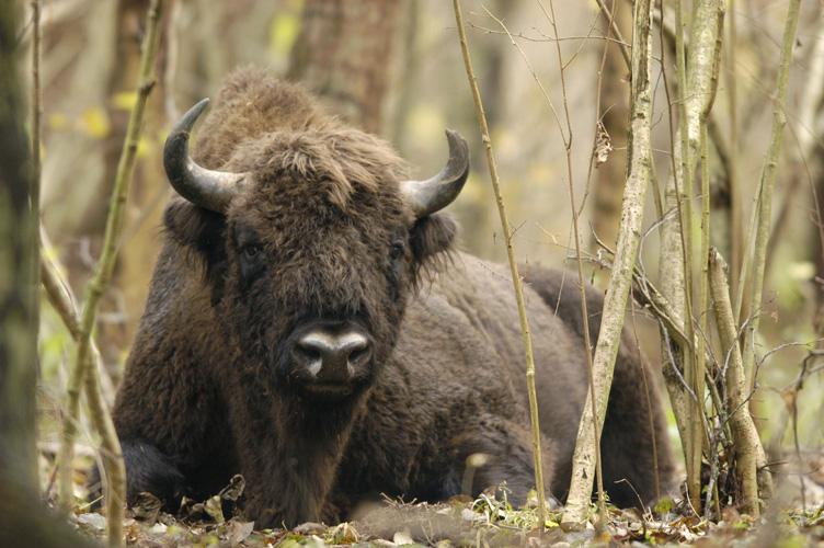 Konkurs przyrodniczy dotyczący Białowieskiego Parku Narodowego